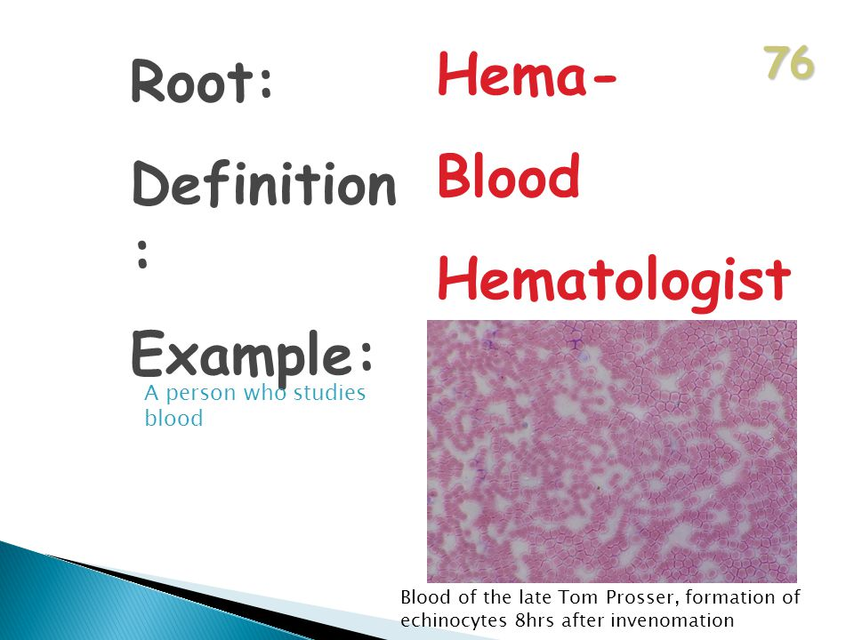 76 Root: Definition : Example: Hema- Blood Hematologist A person who studies blood Blood of the late Tom Prosser, formation of echinocytes 8hrs after invenomation
