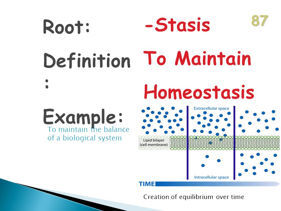 87 Root: Definition : Example: -Stasis To Maintain Homeostasis To maintain the balance of a biological system Creation of equilibrium over time