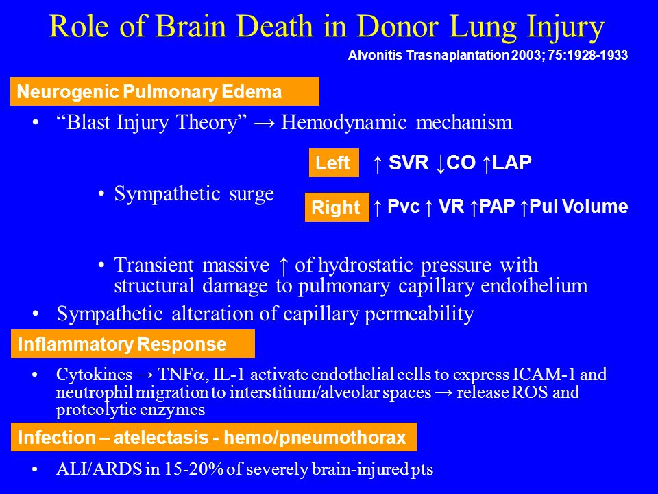 "Role of Brain Death in Donor Lung Injury ""Blast Injury Theory"" → Hemodynamic mechanism Sympathetic surge Transient massive ↑ of hydrostatic pressure w"