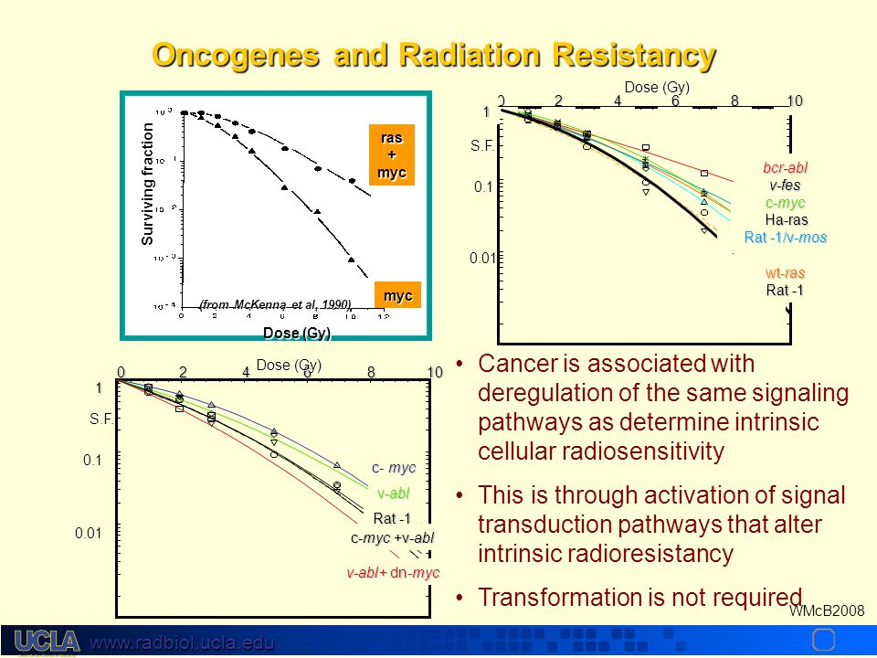 www.radbiol.ucla.edu WMcB2008 Oncogenes and Radiation Resistancy 0246810 1 0.1 0.01 Dose (Gy) S.F.
