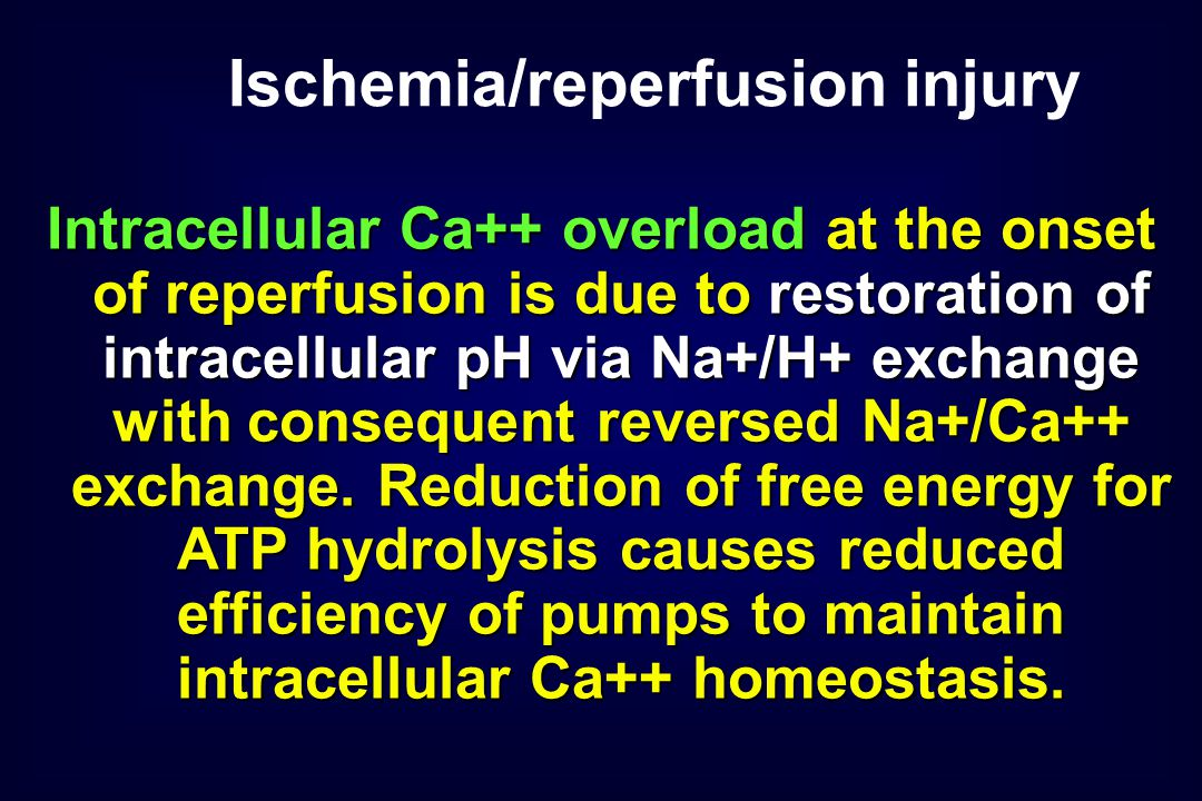 Intracellular Ca++ overload at the onset of reperfusion is due to restoration of intracellular pH via Na+/H+ exchange with consequent reversed Na+/Ca++ exchange.