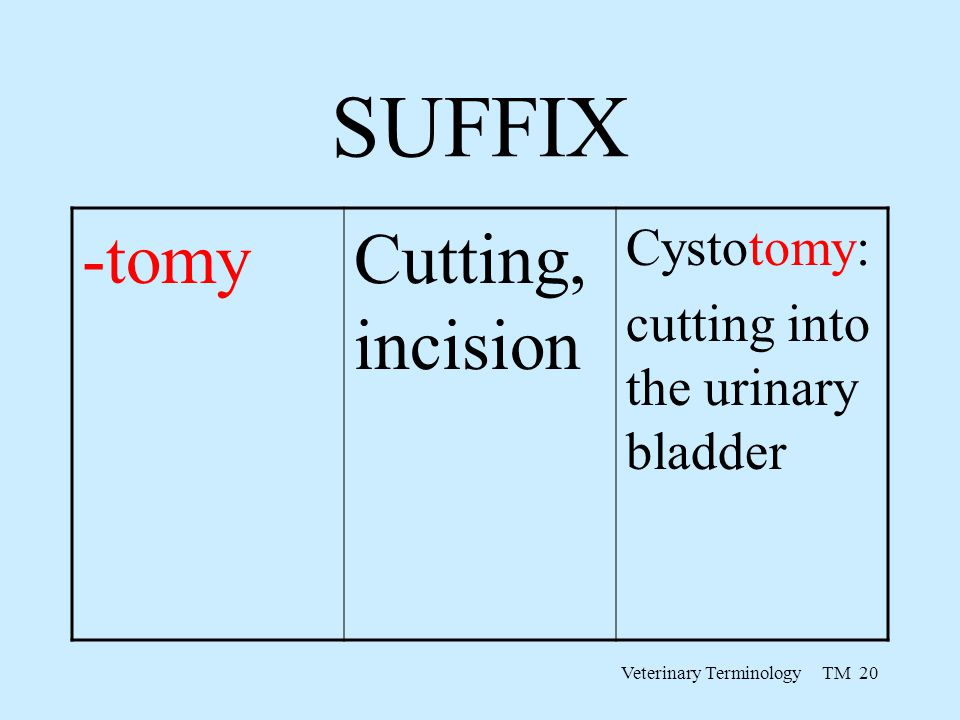 Veterinary Terminology TM 20 SUFFIX -tomyCutting, incision Cystotomy: cutting into the urinary bladder