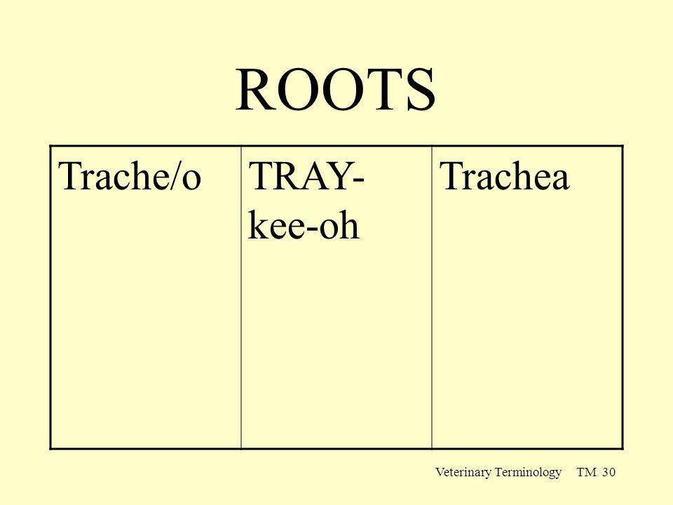 Veterinary Terminology TM 30 ROOTS Trache/oTRAY- kee-oh Trachea