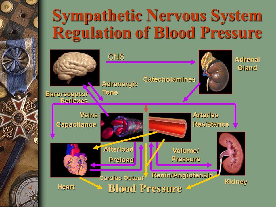 Hypertension Treatment BP = Q x SVR Q = HR x SV SV  preload, contractility, afterload SVR  viscosity, vessel radius
