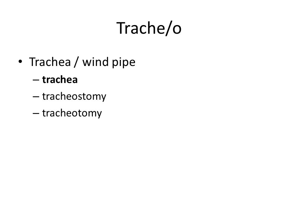 Trache/o Trachea / wind pipe – trachea – tracheostomy – tracheotomy