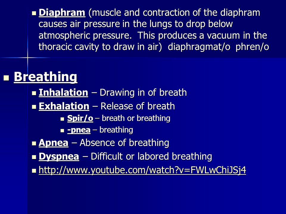 Lower Respiratory System Lower Respiratory System Trachea (windpipe) - trache/o Trachea (windpipe) - trache/o Has C shape cartinlaginous rings. Has C