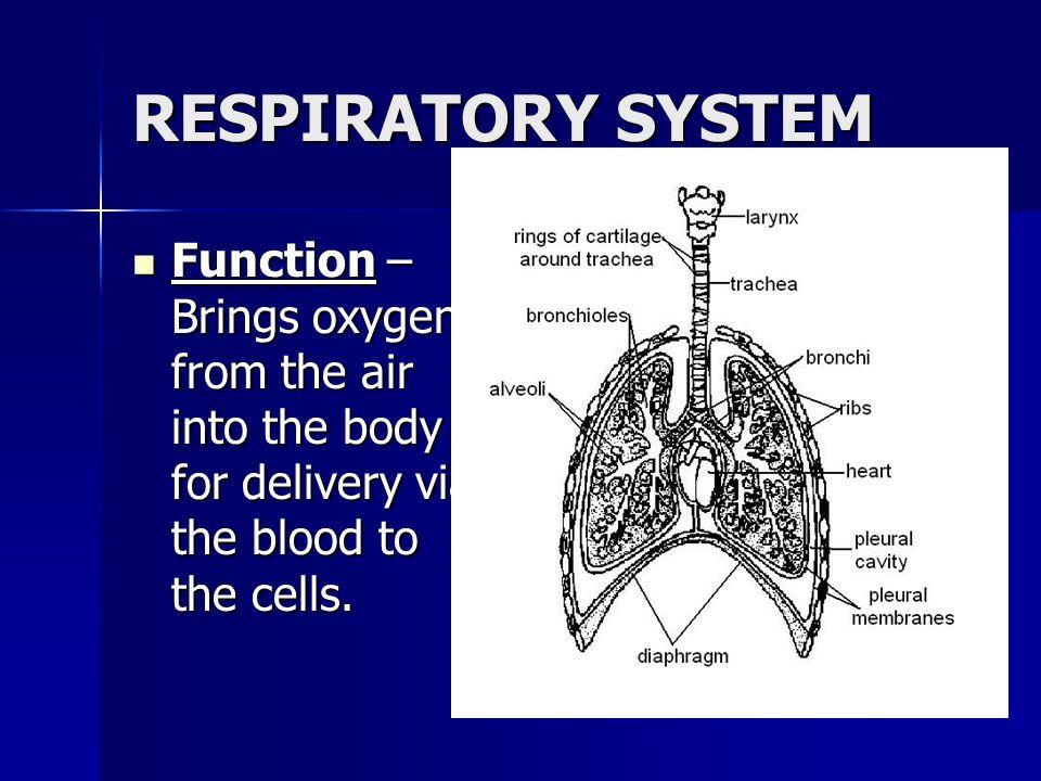 http://www.montana.edu/wwwai/imsd/diabetes/ VESSEL.GIF http://www.peteducation.com/image s/articles/9916dog_crt.jpg http://www.unm.edu/~jimmy/vessel s
