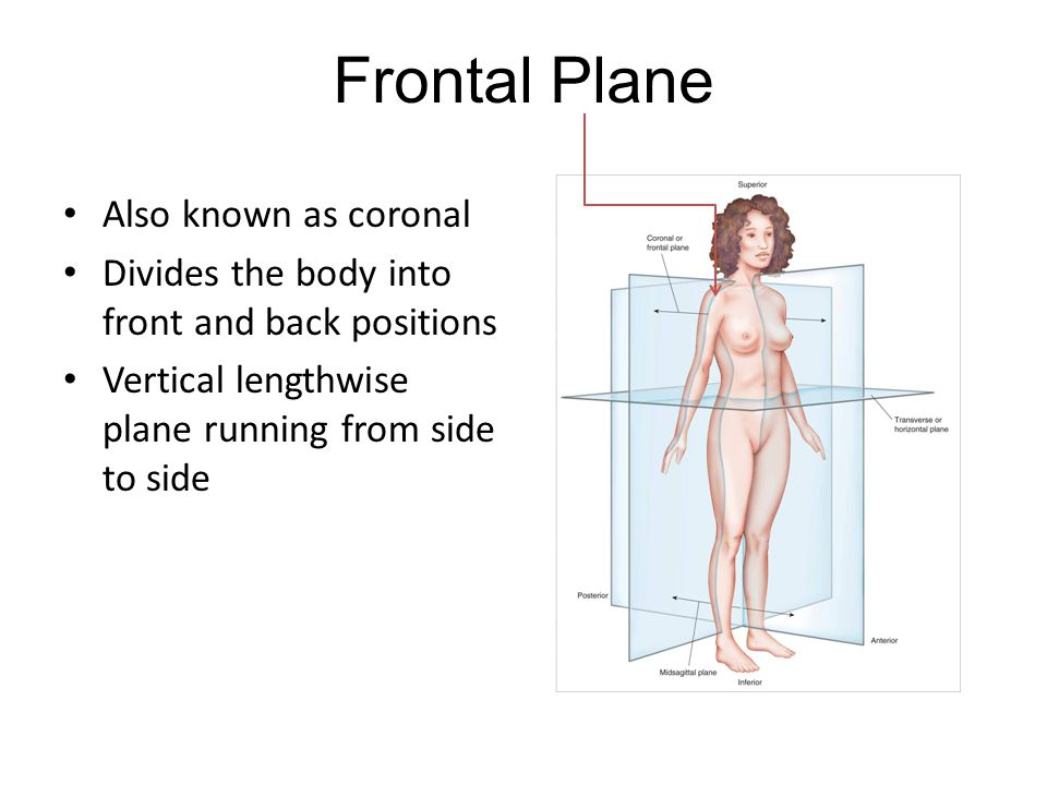 Critical Thinking Question 1.What is an example of when you might discuss something in terms of a plane?