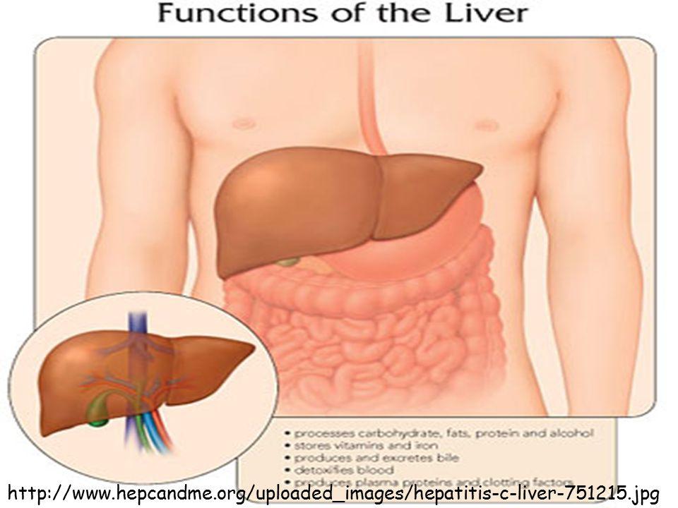 http://www.hepcandme.org/uploaded_images/hepatitis-c-liver-751215.jpg