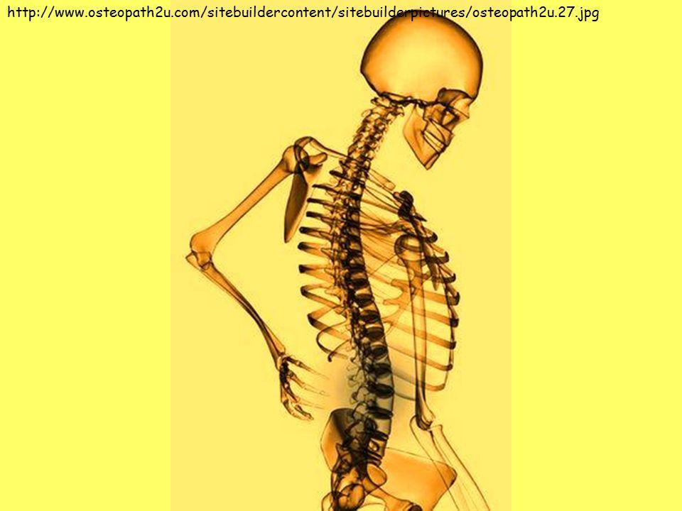 http://www.osteopath2u.com/sitebuildercontent/sitebuilderpictures/osteopath2u.27.jpg