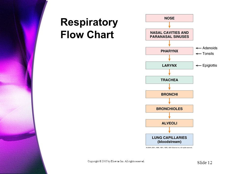 Copyright © 2005 by Elsevier Inc. All rights reserved. Slide 12 Respiratory Flow Chart