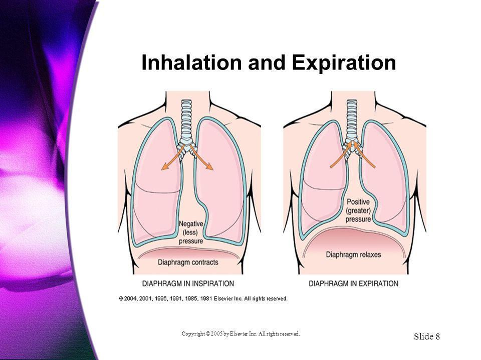 Copyright © 2005 by Elsevier Inc. All rights reserved. Slide 8 Inhalation and Expiration