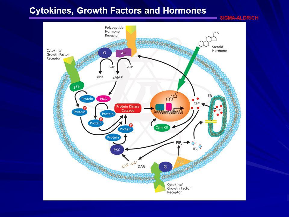Cytokines, Growth Factors and Hormones SIGMA-ALDRICH