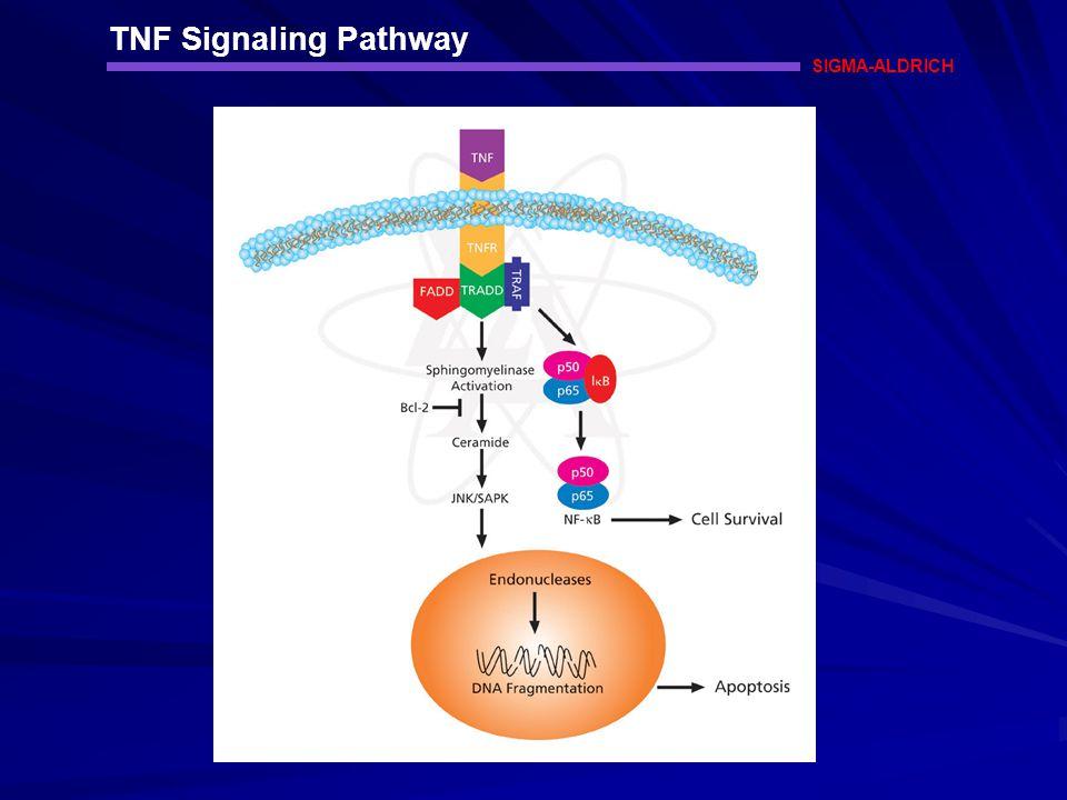 TNF Signaling Pathway SIGMA-ALDRICH