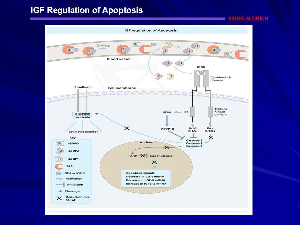 IGF Regulation of Apoptosis SIGMA-ALDRICH