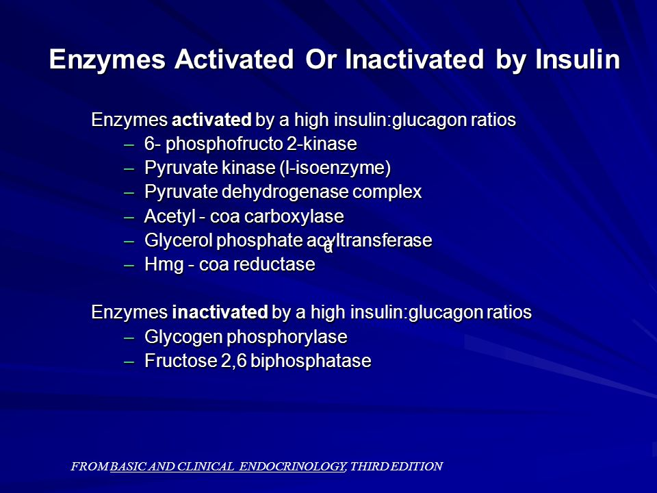 Enzymes Activated Or Inactivated by Insulin Enzymes activated by a high insulin:glucagon ratios –6- phosphofructo 2-kinase –Pyruvate kinase (l-isoenzyme) –Pyruvate dehydrogenase complex –Acetyl - coa carboxylase –Glycerol phosphate acyltransferase –Hmg - coa reductase Enzymes inactivated by a high insulin:glucagon ratios –Glycogen phosphorylase –Fructose 2,6 biphosphatase FROM BASIC AND CLINICAL ENDOCRINOLOGY, THIRD EDITION α α
