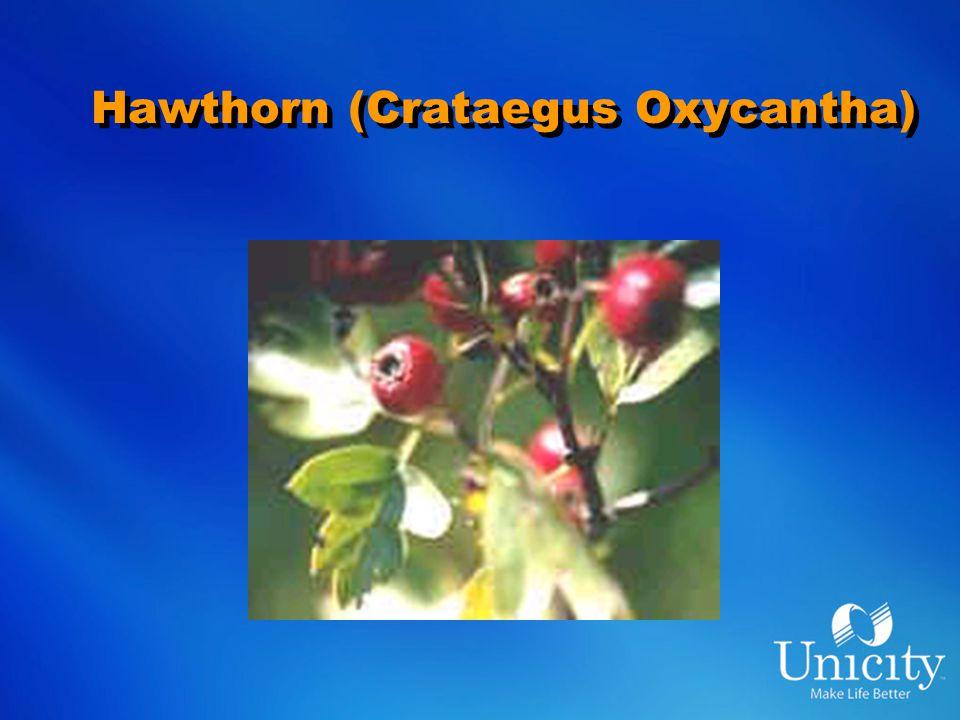 Hawthorn (Crataegus Oxycantha)
