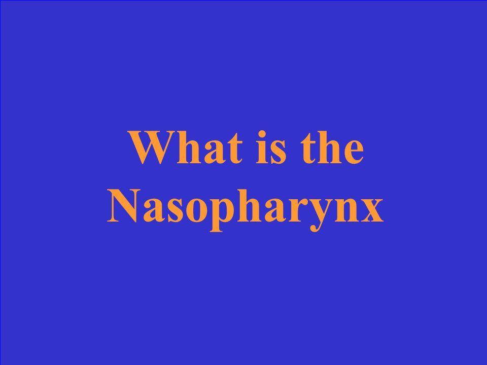 This is the section of the pharynx that the adenoids are located