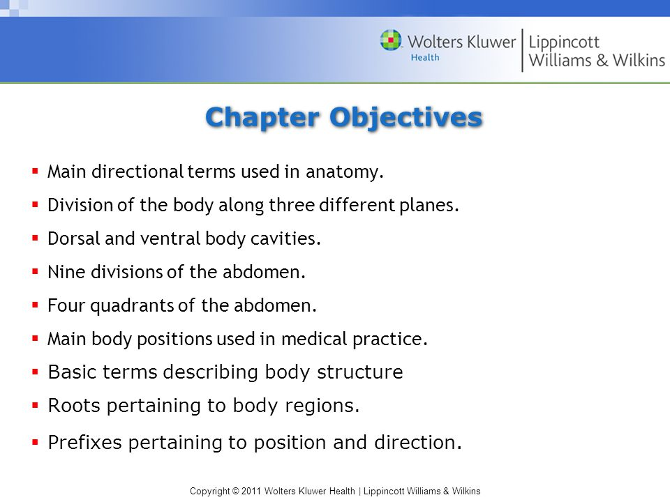 Copyright © 2011 Wolters Kluwer Health | Lippincott Williams & Wilkins Key Terms abdominal cavityThe larger ventral cavity below the diaphragm and above the pelvic cavity abdominopelvic cavity The larger ventral cavity between the diaphragm and pelvis that includes the abdominal and pelvic cavity anatomic positionStandard position for anatomical studies, in which the body is erect and facing forward, the arms are at the sides with palms forward, and the feet are parallel cranial cavityThe dorsal cavity that contains the brain diaphragmThe muscle that separate the thoracic from the abdominal cavity frontal (coronal) plane Plane of section that separates the body into anterior (front) and posterior (back) portions pelvic cavityThe ventral cavity that is below the abdominal cavity