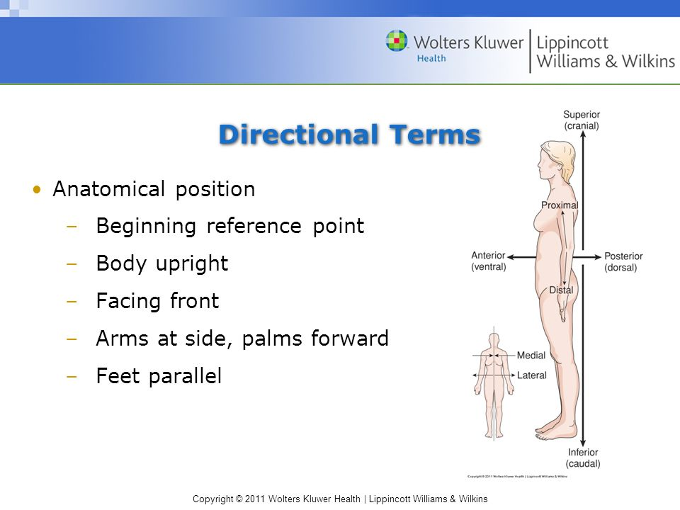 Copyright © 2011 Wolters Kluwer Health | Lippincott Williams & Wilkins Directional Terms Anatomical position –Beginning reference point –Body upright –Facing front –Arms at side, palms forward –Feet parallel