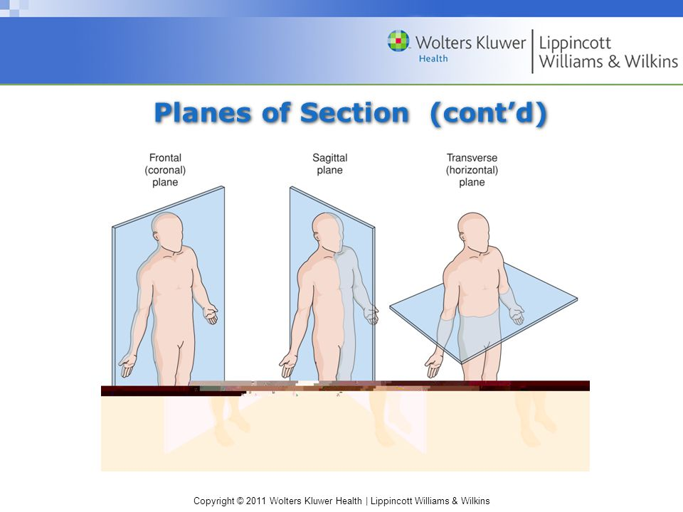 Copyright © 2011 Wolters Kluwer Health | Lippincott Williams & Wilkins Planes of Section (cont'd)