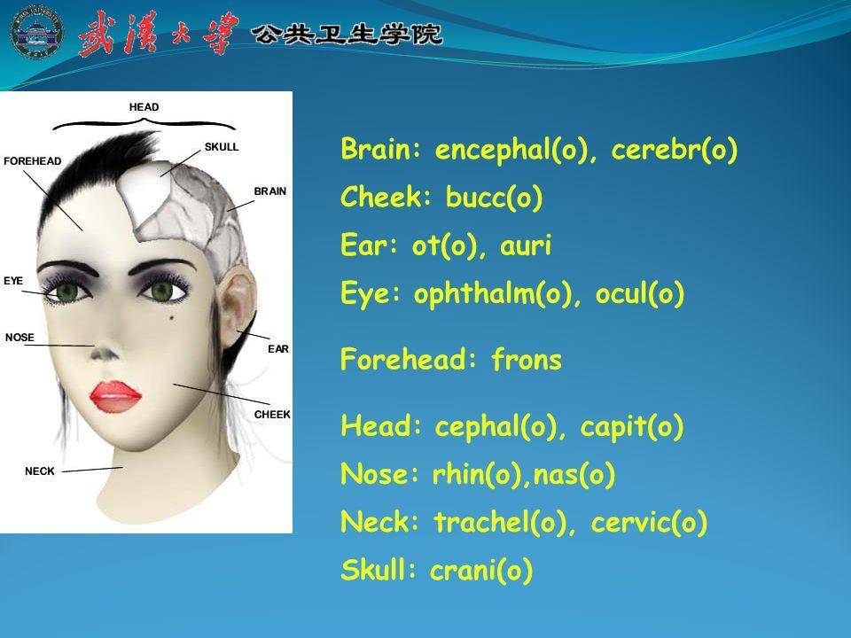Lip: cheil(o), labi(o) Mouth: stom(at), or(o) Sinus: sin Tongue: gloss(o), glott-, lingua- Tooth: odont(o), dent-