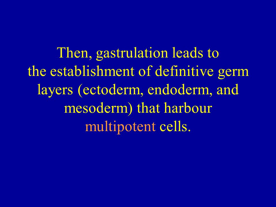 Then, gastrulation leads to the establishment of definitive germ layers (ectoderm, endoderm, and mesoderm) that harbour multipotent cells.