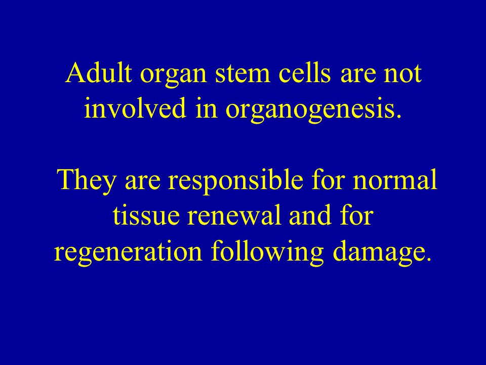 Adult organ stem cells are not involved in organogenesis.