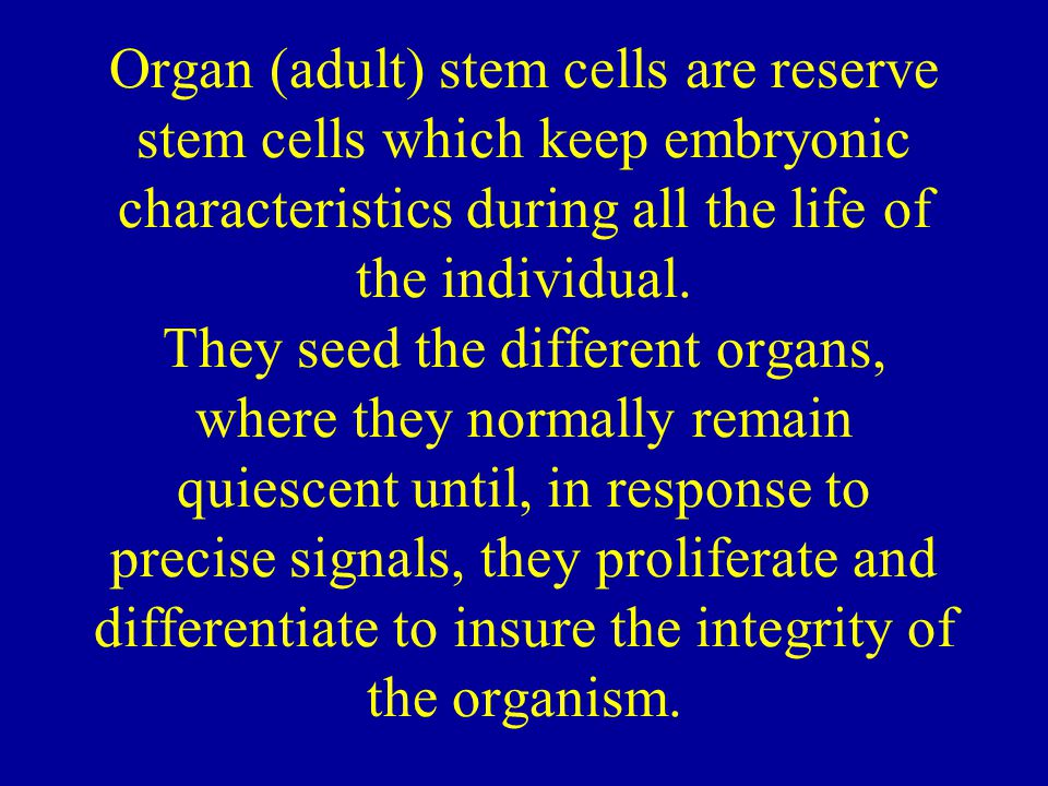 Organ (adult) stem cells are reserve stem cells which keep embryonic characteristics during all the life of the individual.