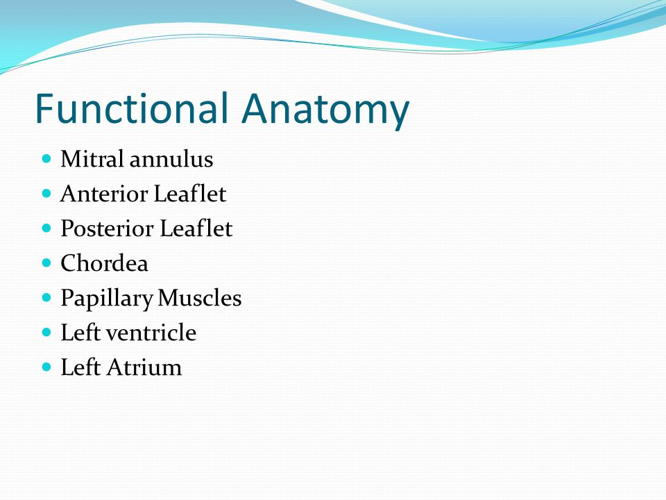 Functional Anatomy Mitral annulus Anterior Leaflet Posterior Leaflet Chordea Papillary Muscles Left ventricle Left Atrium
