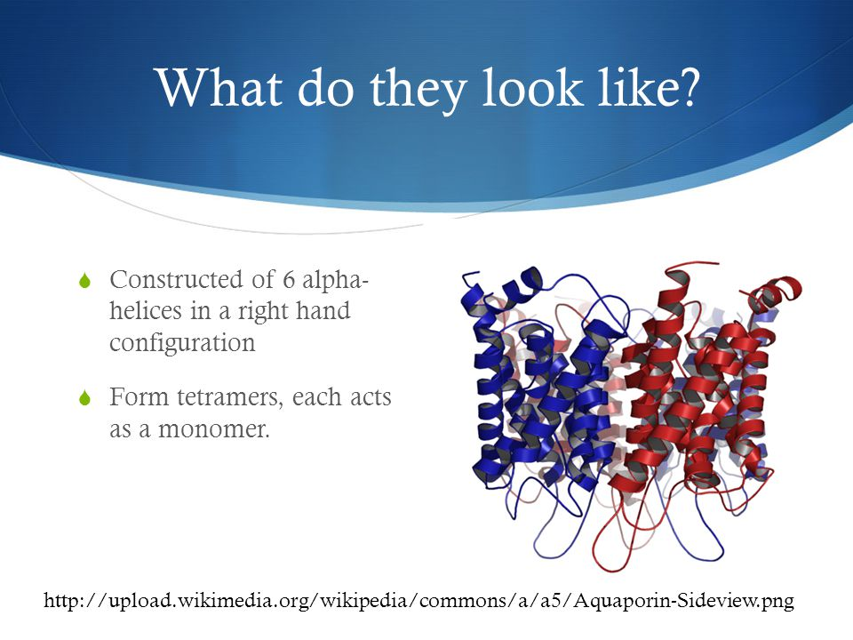 Types of Aquaporin  Aquaporins vs Aquaglyceroporins  What is the difference.