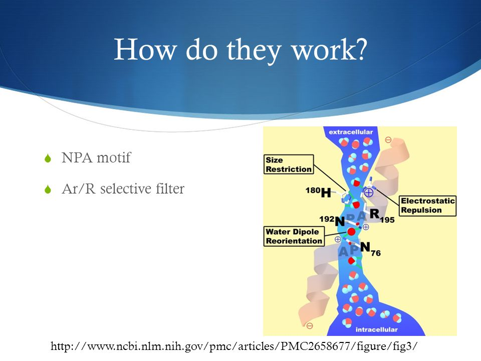 What is my project. Comparing the Aquaporin and Aquaporin like genes in the human genome.