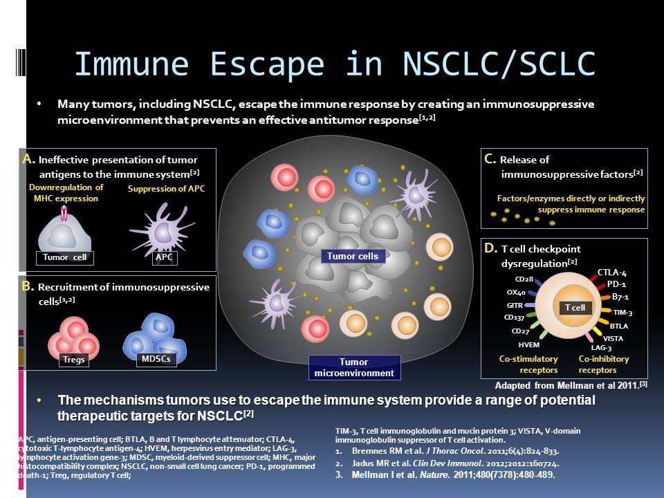 Immune Escape in NSCLC/SCLC A.