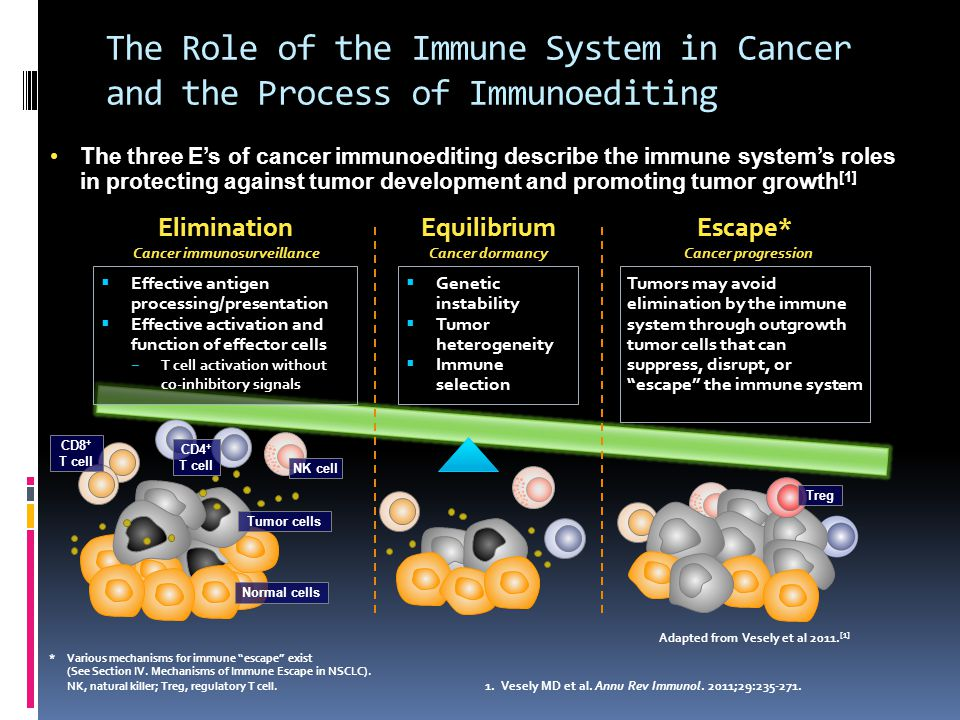 The Role of the Immune System in Cancer and the Process of Immunoediting The three E's of cancer immunoediting describe the immune system's roles in protecting against tumor development and promoting tumor growth [1]The three E's of cancer immunoediting describe the immune system's roles in protecting against tumor development and promoting tumor growth [1] *Various mechanisms for immune escape exist (See Section IV.