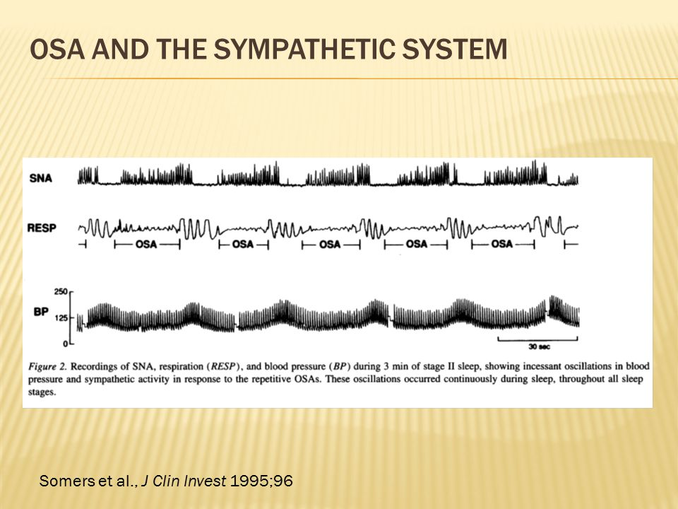 OSA AND THE SYMPATHETIC SYSTEM Somers et al., J Clin Invest 1995;96