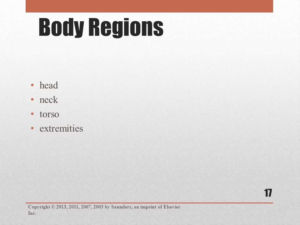 Body Regions head neck torso extremities Copyright © 2013, 2011, 2007, 2003 by Saunders, an imprint of Elsevier Inc.