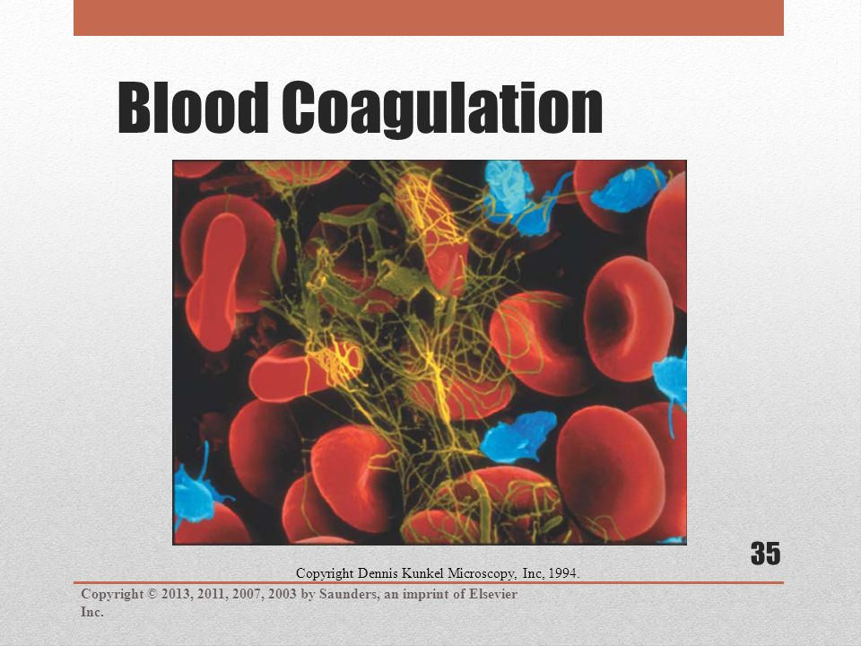 Blood Coagulation Copyright © 2013, 2011, 2007, 2003 by Saunders, an imprint of Elsevier Inc. 35 Copyright Dennis Kunkel Microscopy, Inc, 1994.