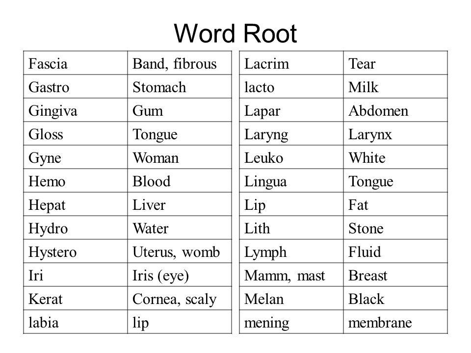 Word Root FasciaBand, fibrous GastroStomach GingivaGum GlossTongue GyneWoman HemoBlood HepatLiver HydroWater HysteroUterus, womb IriIris (eye) KeratCornea, scaly labialip LacrimTear lactoMilk LaparAbdomen LaryngLarynx LeukoWhite LinguaTongue LipFat LithStone LymphFluid Mamm, mastBreast MelanBlack meningmembrane