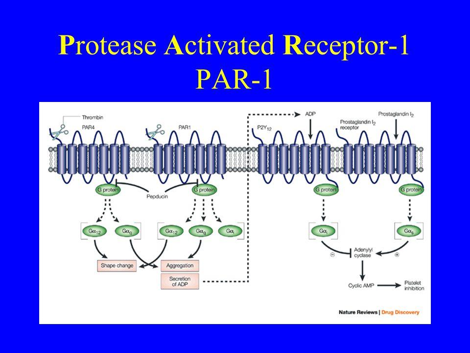 Protease Activated Receptor-1 PAR-1