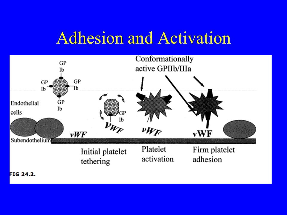 Adhesion and Activation