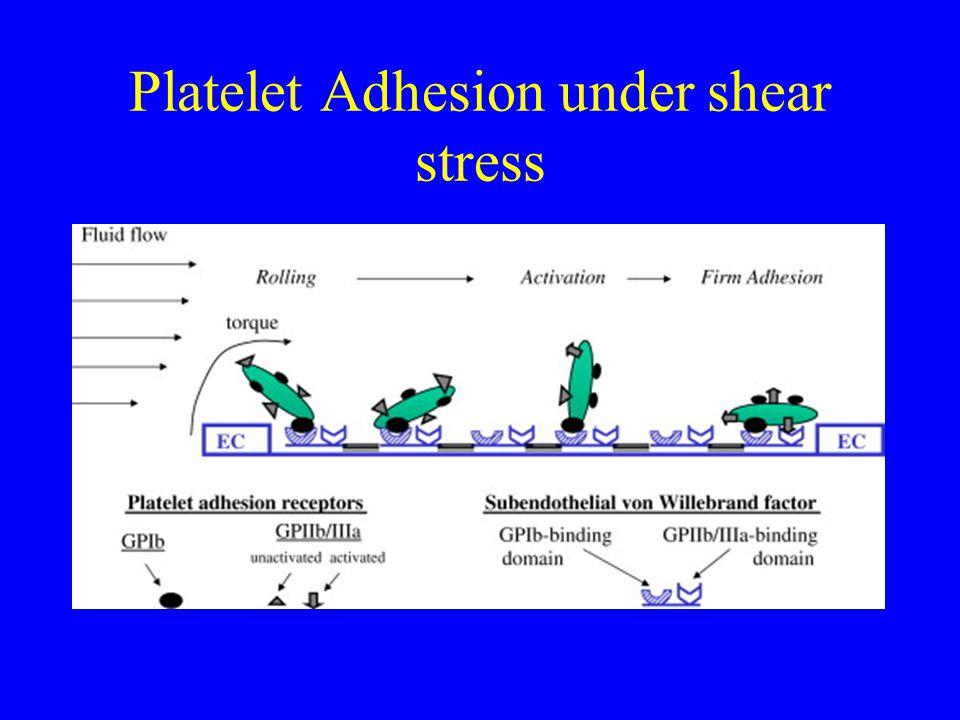 Platelet Adhesion under shear stress