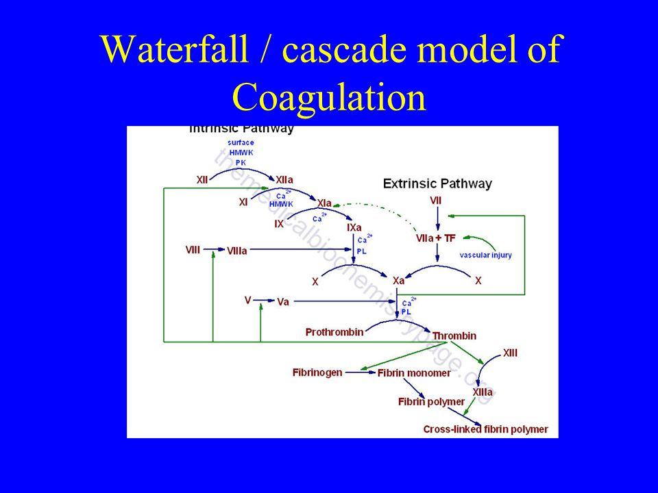 Waterfall / cascade model of Coagulation