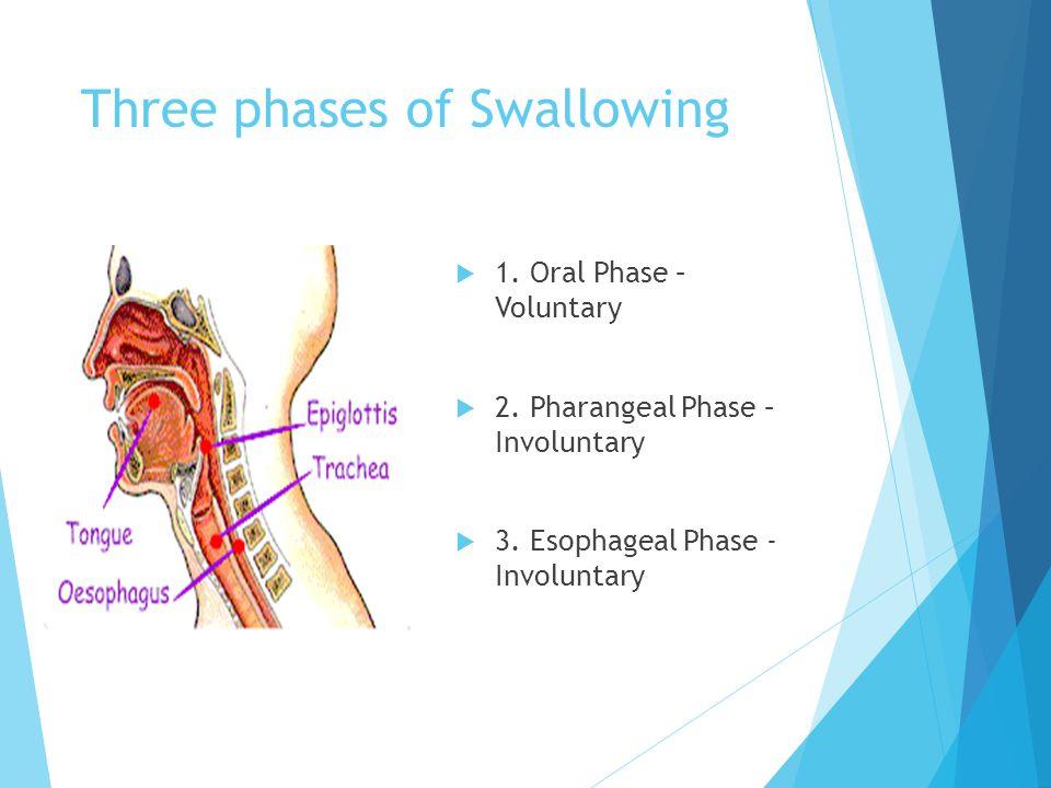 Barium Swallow : Findings show the BIRD's BEAK IMAGE