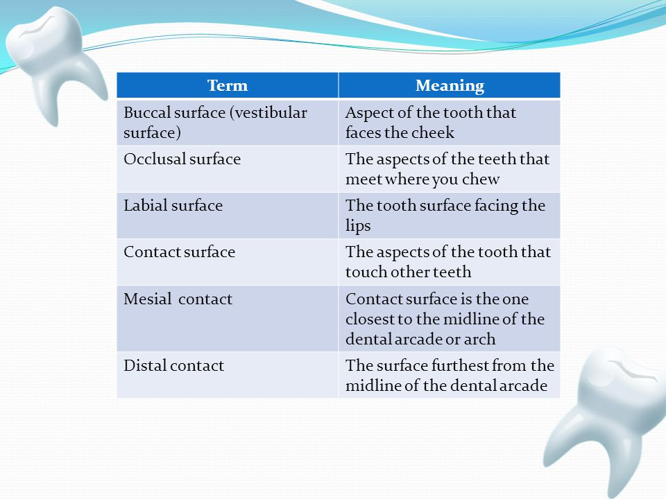 TermMeaning Buccal surface (vestibular surface) Aspect of the tooth that faces the cheek Occlusal surfaceThe aspects of the teeth that meet where you