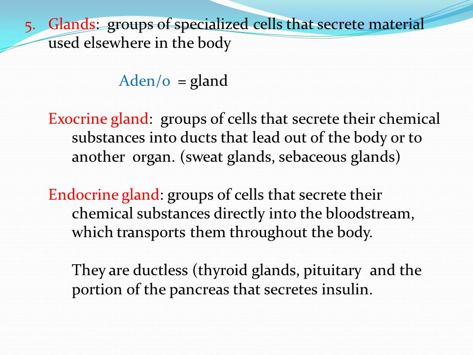 5.Glands: groups of specialized cells that secrete material used elsewhere in the body Aden/o = gland Exocrine gland: groups of cells that secrete the