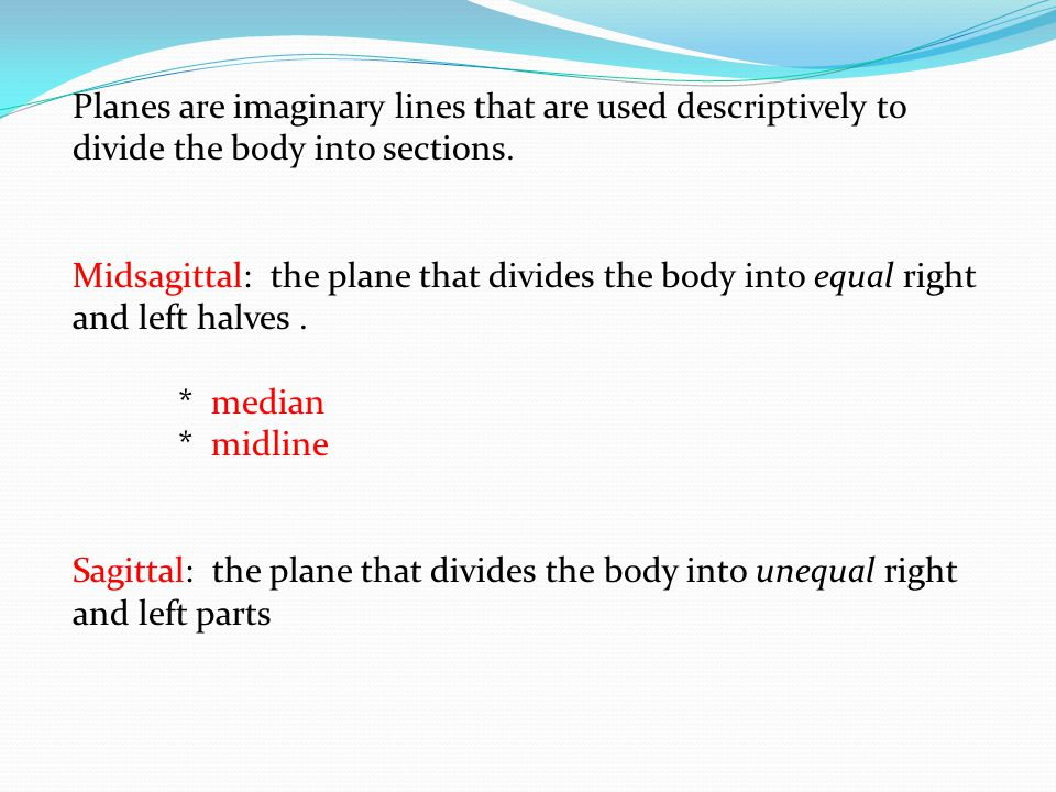 Dorsal: the plane that divides the body into dorsal (back) and ventral (belly) parts * frontal * coronal Transverse: the plane that divides the body into cranial and caudal parts * horizontal plan * cross-sectional plan