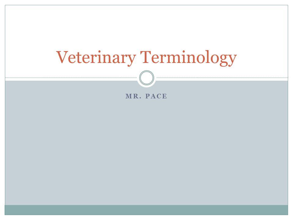 MR. PACE Veterinary Terminology