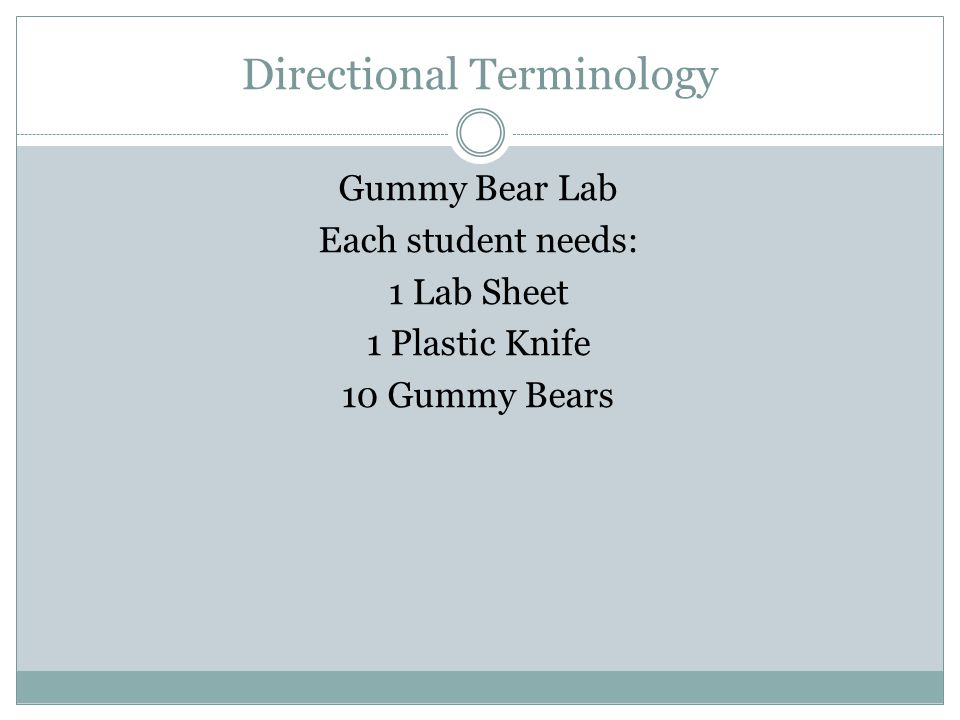 Directional Terminology Gummy Bear Lab Each student needs: 1 Lab Sheet 1 Plastic Knife 10 Gummy Bears