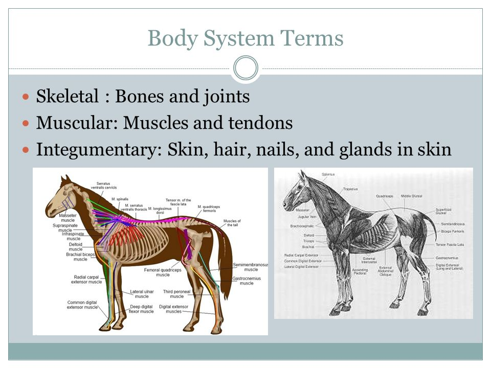 Body System Terms Sensory: Eyes, ears, nose, skin receptors, and mouth Cardiovascular: Heart, blood vessels, and blood Lymphatic: Tonsils, spleen, thymus, lymph nodes, lymphatic vessels, and lymph fluid