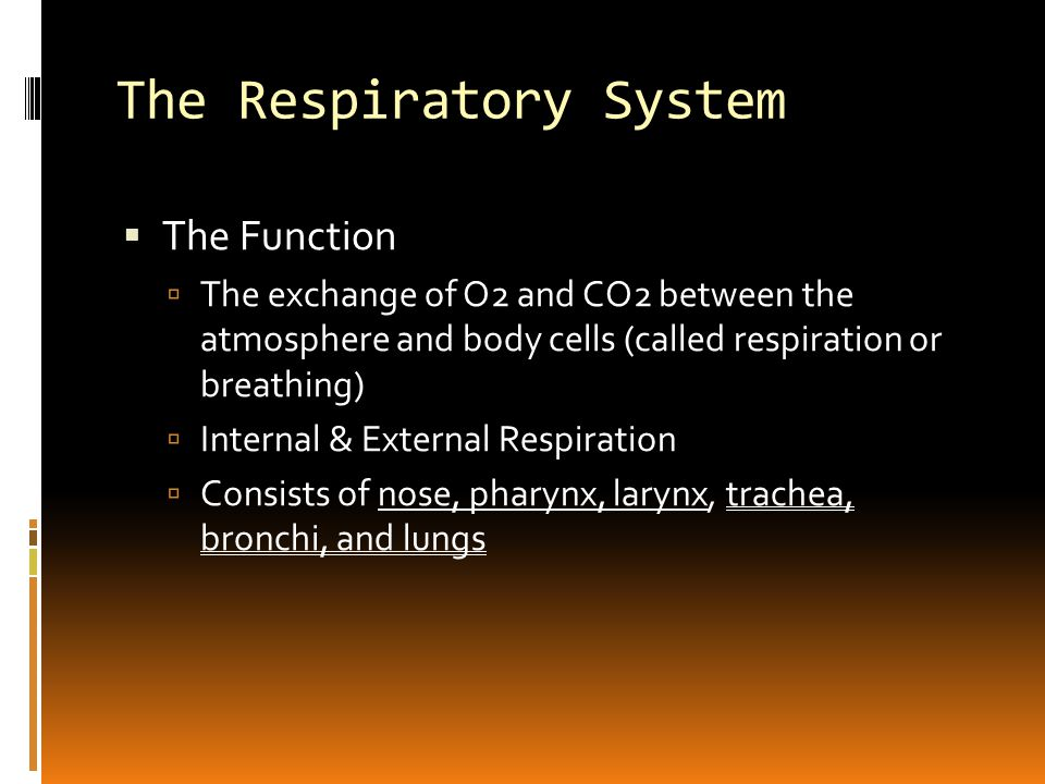 The Respiratory System  Organs of the Respiratory System  Nose  Lined with mucous membrane and fine hairs; it acts as a filter to moisten and warm the entering air  Nasal Septum: partition separating the right and left nasal cavities  Paranasal sinuses: air cavities within the cranial bones that open into the nasal cavities  Pharynx  Serves as a food and air passageway (also called throat)  Air= nose, pharynx, larynx  Food=mouth, pharynx, esophagus